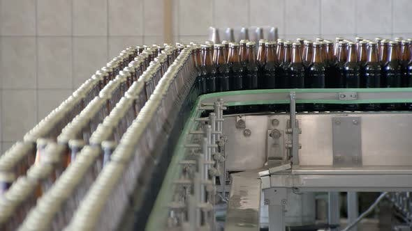 Packing Technological Line in Bottling Workshop, Dark Glass Bottles with Beer Are Moving