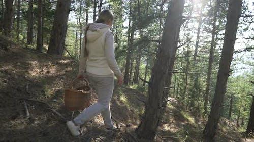Mushrooming, Frau pflückt Pilze im Wald