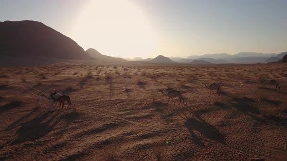 Bedouin Shepherd Herd Camels In the hot Desert of Wadi Rum, Jordan. 4K