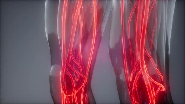 Thumbnail for Blutgefäße des menschlichen Körpers