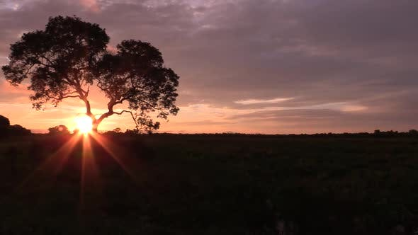 Thumbnail for Brazil Pantanal Large Lone Tree and Orange Sky at Sunset with Silhouette
