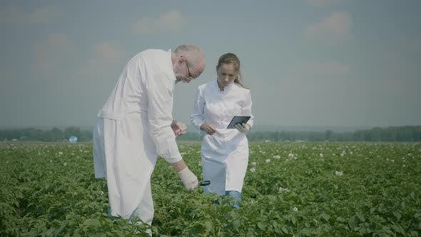 Thumbnail for Scientists researching agricultural field