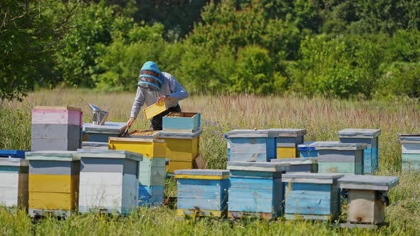 Beekeeping in summer