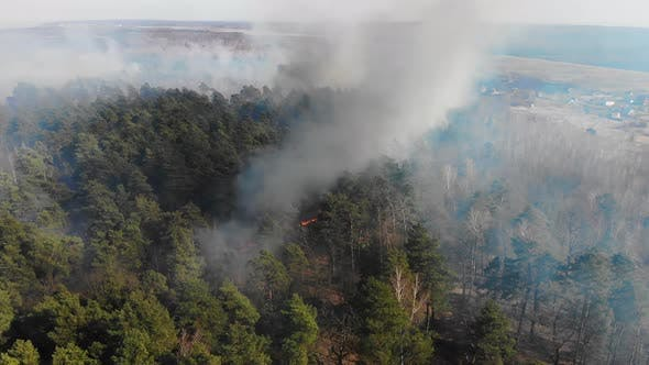 Aerial Large-scale Forest Fire. A Large Area of Forest Is Burning. Fire in the Pine Forest View From