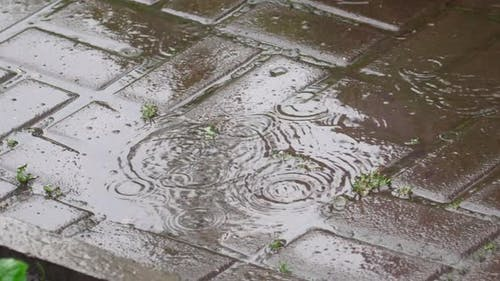 Raindrops of Summer Rain