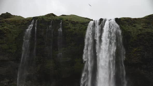 Thumbnail for Seljalandsfoss Powerful Waterfall With Lots Of Water And Flying White Bird South Region In Iceland