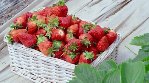 Wicker Basket with Freshly Picked Strawberries