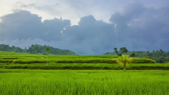 Thumbnail for Evening Clouds over Rice Terraces