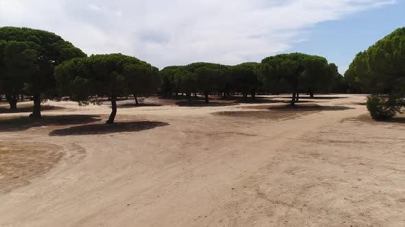 Thumbnail for Pines Plantation