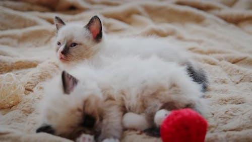 Two Little Kitten is Sleeping