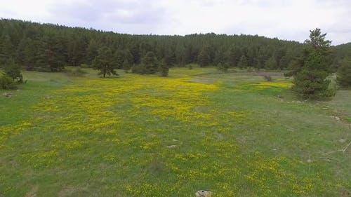 Flowering Gap Between the Forest