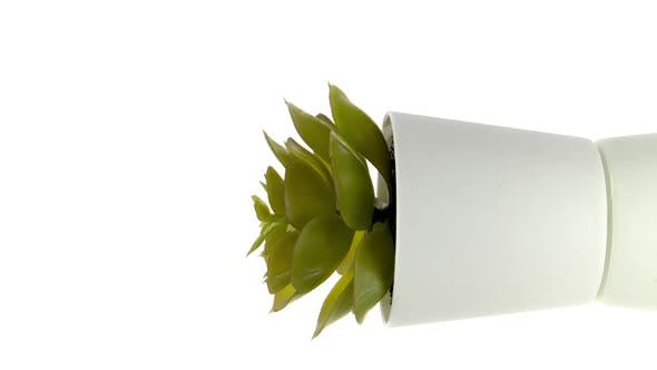 Vertical Video Indoor Succulent Plant in White Flowerpot Rotating 360 Isolated on White