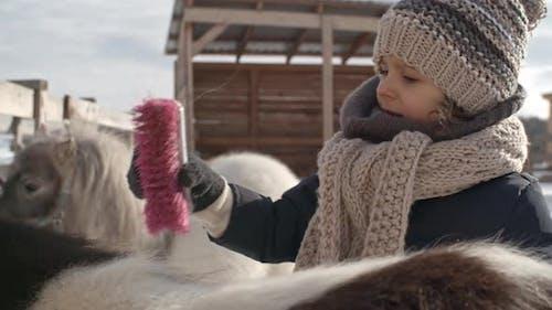 Little Girl Grooming Pony