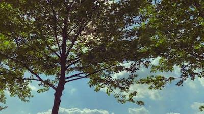 Sun Shining In Trees