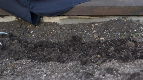Thumbnail for Closeup Gloved Gardener's Hand Loosens Soil with Culti-hoe Before Planting Seeds