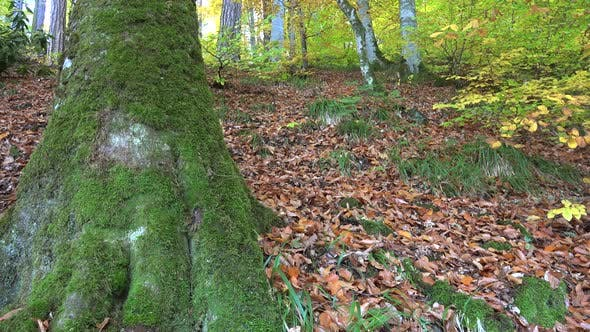 Colorful Autumn Forest Floor Covered With Dry Leaves