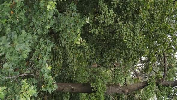 Aerial View of Green Forest in Summer