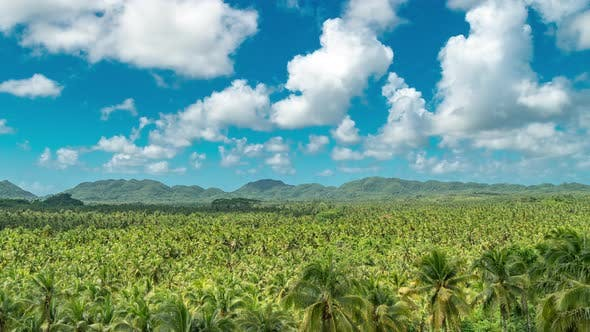 Cover Image for Palm Trees Forrest in Siargao, Philippines. Beautiful Nature Palm Jungle at the Summer Day