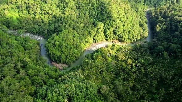 Cover Image for Drone Shot of Lush Green Rainforest and River in Bali