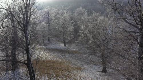 Hoar frost on tree branches 4K drone video