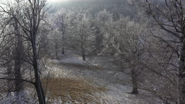 Thumbnail for Hoar frost on tree branches 4K drone video
