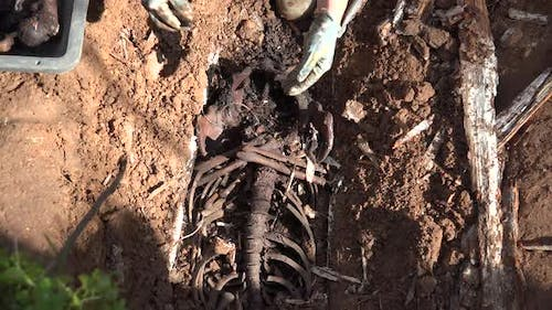 Exhumation Of Human Remains