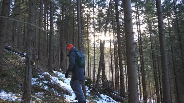 Thumbnail for Male Tourist with Backpack Walks Up the Slope of Pine Forest with Sunlight at Background. Young