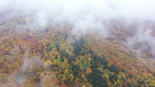 Thumbnail for Wild Forest In Spectacular Autumn   Aerial Views