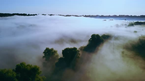 Thumbnail for Forest in the Fog Aerial View