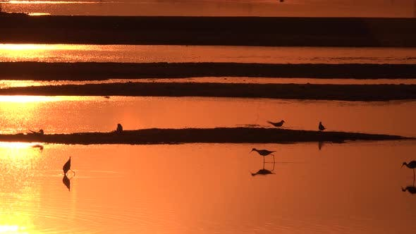 Thumbnail for Reflection of the Orange Sunset on the Water Surface with Birds on the Sand.