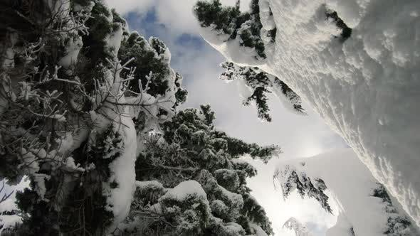 Thumbnail for Unique Perspective Looking Up Snowy Tree Well Gimbal Push To Sky