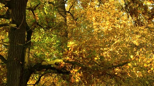 Trees in Forest with Colorful Leaves