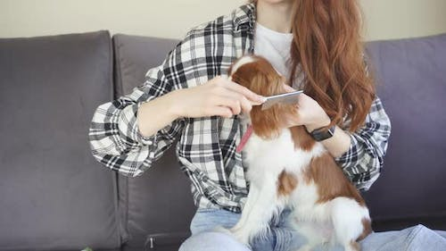 Young Woman Combs Her Dog on the Couch at Home