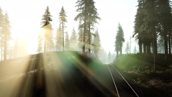 Thumbnail for Flight Over A Railway Surrounded By Forest with Sunbeams