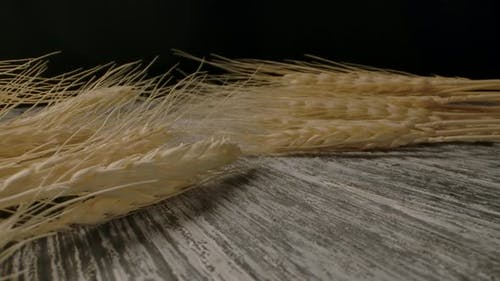 Ripe Wheat Placed on Table