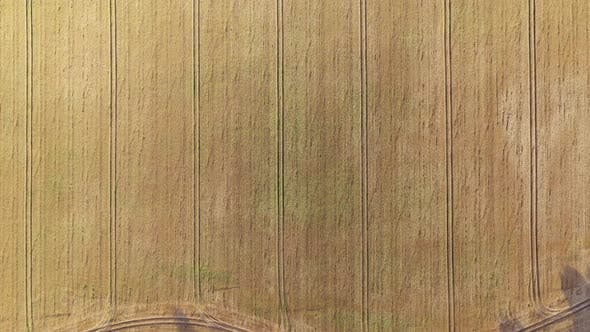 Thumbnail for Aerial Video Flying Over Yellow Grain Wheat Field