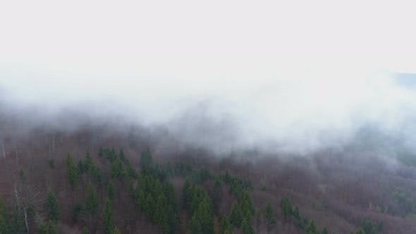 Thumbnail for Mountain Forest in Fog. Twilight Landscape with Fog Above Forest