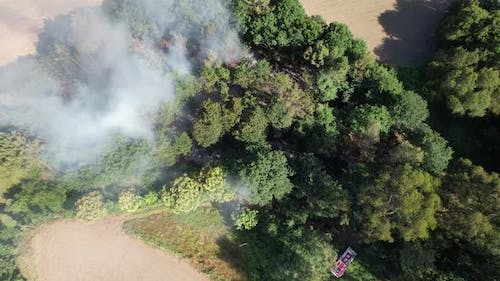 Natural Disaster for the Environment Forest Fire