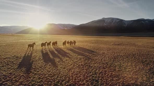 Thumbnail for Wild Horses Running