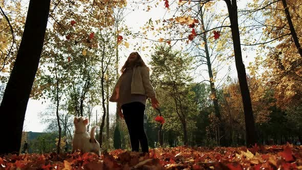 Autumn Slow Motion Jack Russell Terrier Dog, Happily The Girl Throws Orange Leaves Up, the Dog