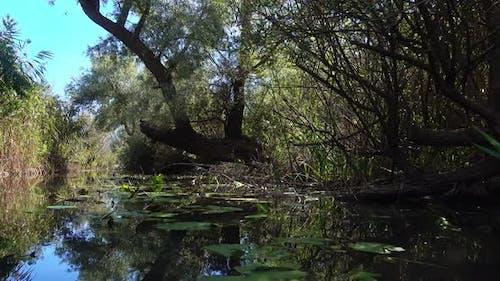 Swamp V1