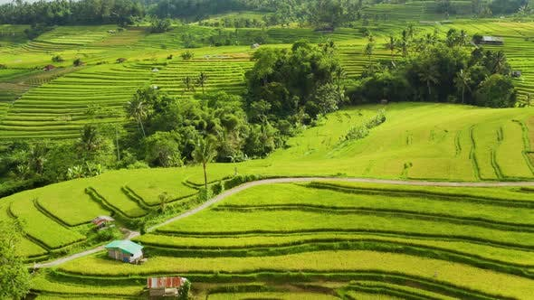 Thumbnail for Flying Over Terraced Rice Paddies In Bali.