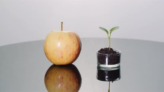Thumbnail for Fresh Ripe Apple and Small Young Apple Tree - Fruits Production Concept