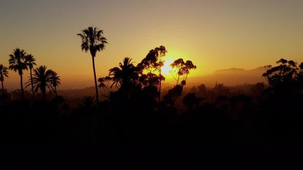 Thumbnail for Aerial shot of a row of palm trees at Sunset