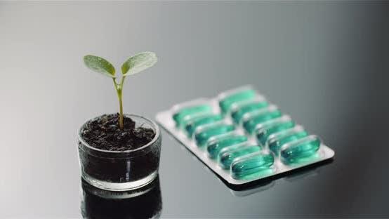 Thumbnail for Kapseln Nach Pflanze Auf Tisch