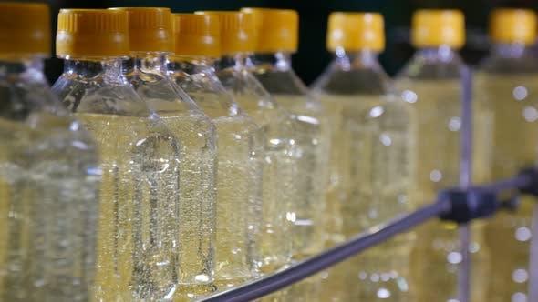 Thumbnail for Bottled Sunflower Oil Moving in Conveyor Stripe in the Black Backdrop
