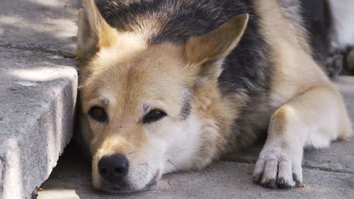 Gros plan chien paresseux sur le sol avec résolution