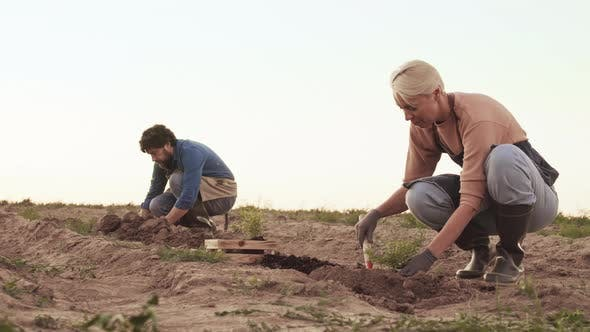Thumbnail for Two Farmers Planting Plants in the Field