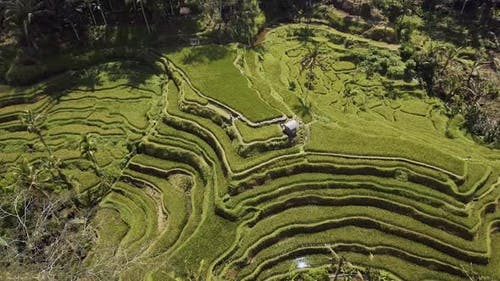 Above Rice Fields