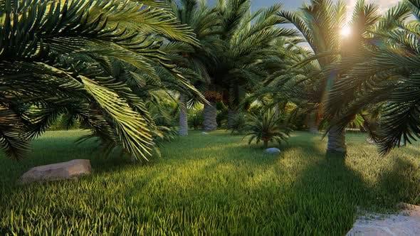 Thumbnail for Garden Of Palms 2k